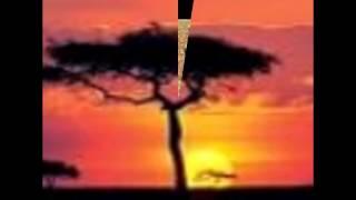"África Negra 2014 ""mohithas"""
