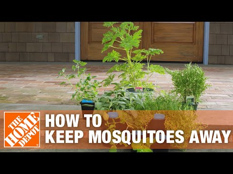 A video outlining methods to eliminate and prevent mosquitoes.