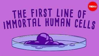 The immortal cells of Henrietta Lacks - Robin Bulleri width=
