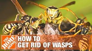 Yellow Jackets - Yellow Jackets & Wasps