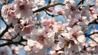 Tavaszi szél vizet áraszt (instrumental) [HD]