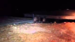 חזירים בלילה