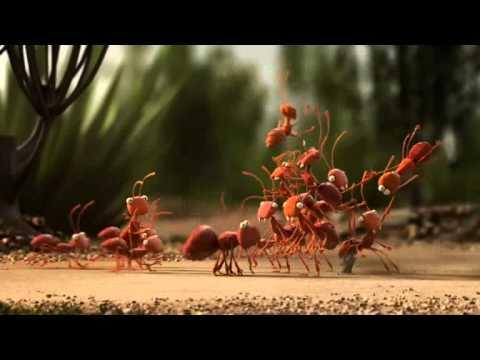 Ameisen gegen Ameisenbär