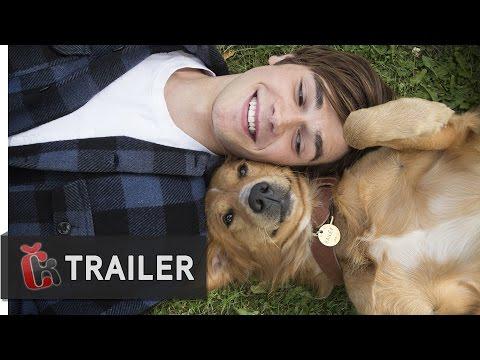 Psí poslání (2017) - oficiální dabovaný trailer
