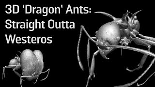3D 'Dragon' Ants: Straight Outta Westeros