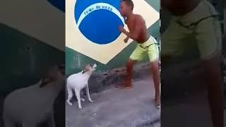 Cachorrinho dançando (Video Original) meme do cachorro