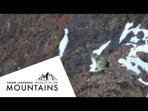 In Search Of The Snow Leopard with Exodus Travels