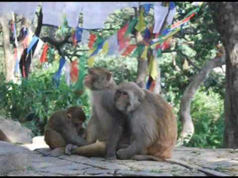 Nepal_2009.wmv