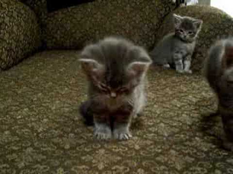 Little Kitten So Tired. Cutest vid ever!!!