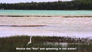 Fish Spawning in the Bay at Mackinaw Mill Creek Camping - YouTube
