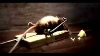 Mouse Trap Workout Like Rocky Balboa (Complete Clip)