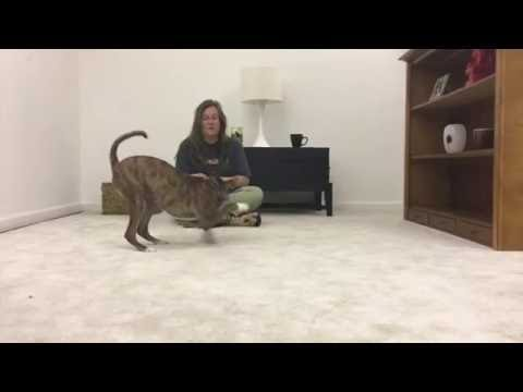 Dog com's Basic Training Series: The Recall Part 1