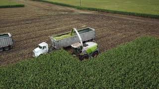 CY Harvesting, chopping silage 2017 width=