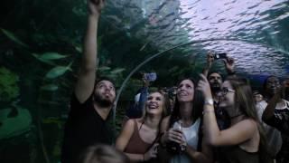 Road trip to Toronto - ripley's aquarium of canada