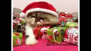 El gato envidioso