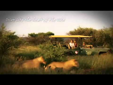 South Africa Wildlife And Nature