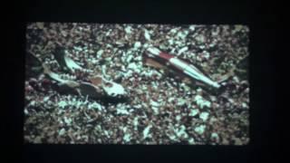 NeuesGold - 12 Schall & Rausch [VISUALS]