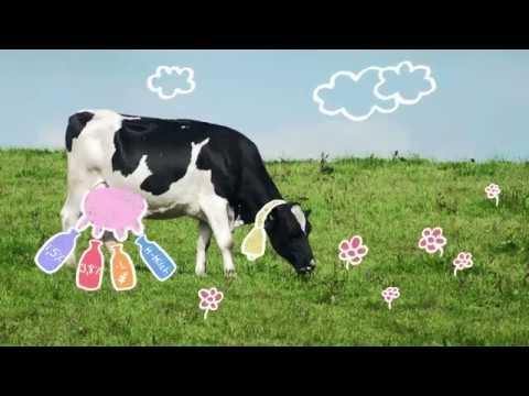 Die Kuh gibt vier Sorten Milch?