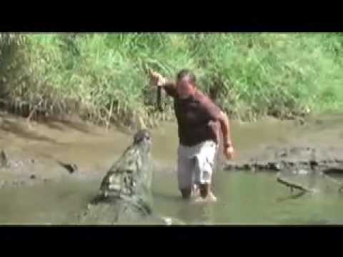 Giant Croc Swallows Man's Arm? This is nuts!!!