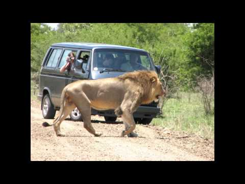 OU Suid Afrika