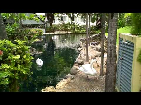 Trinity Videos a Swan