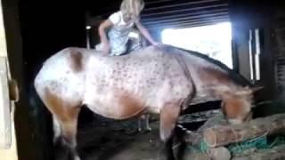 menina pequena montando a cavalo