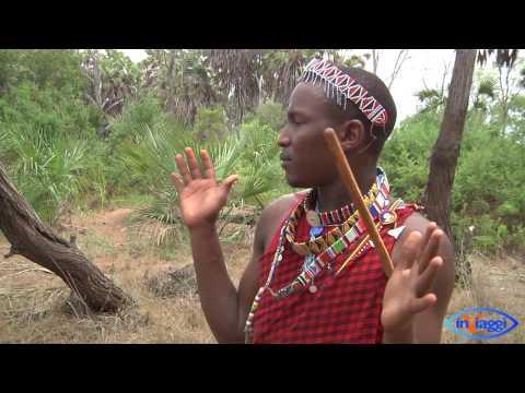 Safari Parco Nazionale Tsavo