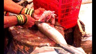Mori (Shark) मुशी मासा(शार्क) How to Cut it Correctly - Dahisar Fish market - Mumbai