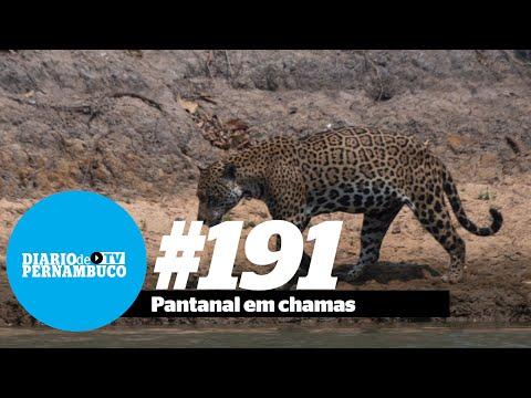 Pantanal: o pior incêndio da história