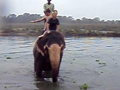 Swimming with Elephants Nepal 2