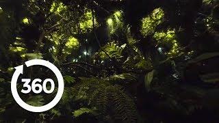 Legend of Tarzan: Deep in the Jungle (360 Video)