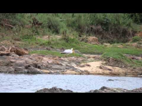 Kruger –  Lukimbi Safari Lodge.m4v