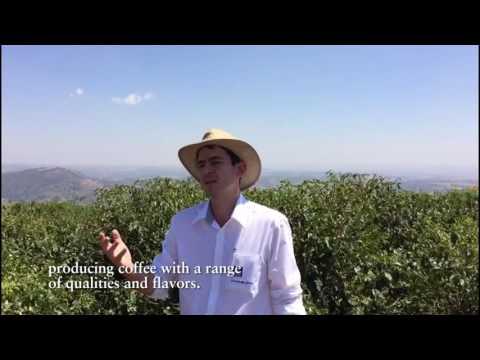 International Coffee Day 2016, Yara Brazil