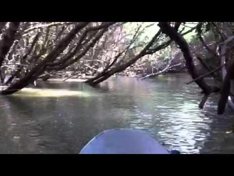 エクアドルのエコツーリズム、マングローブの島の旅