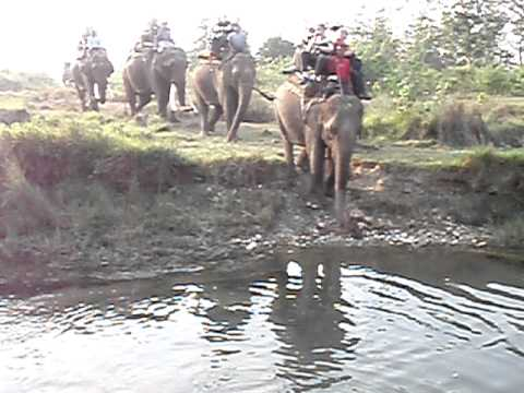 Crossing a river on an elephant