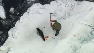 2014 Canadian Seal Hunt Exposed