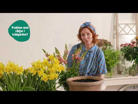 Oväntat besök - skydda dina blommor