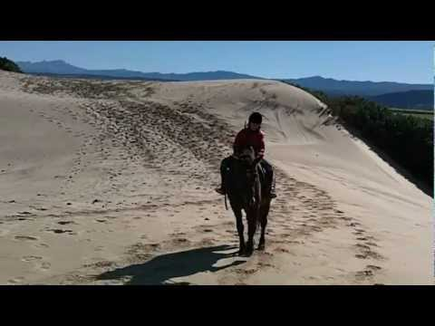 Horse Riding South Africa 1.MOV
