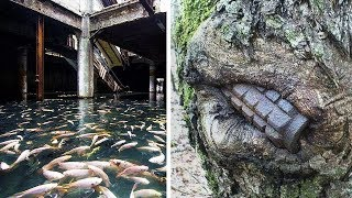 Proof That Nature Takes Control Over Abandoned Places