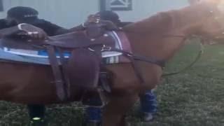 Rick Ross Taking Horseback Riding Lessons
