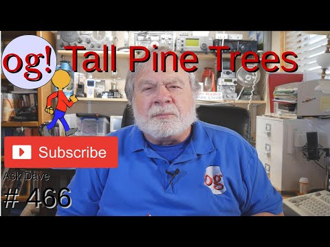 Tall Pine Trees (#466)