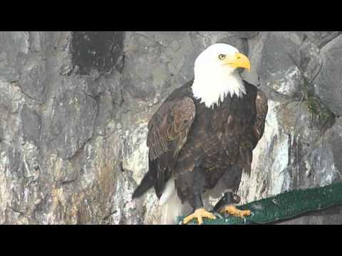 Eagle watching at Parque Condor