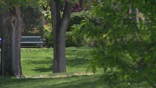 Popular activity 'slacklining' not allowed on Albuquerque park trees