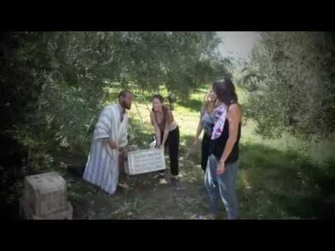 Moroccan Cuisine: Making our Olive Oil 2011