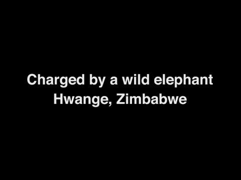Elephant Charge - Hwange, Zimbabwe