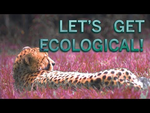 Let's Get Ecological!