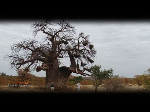 Mopane Bush Lodge Accommodation Musina Limpopo South Africa – Africa Travel Channel