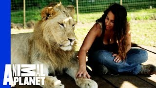 Lions Treat Woman Like the Leader of the Pride width=