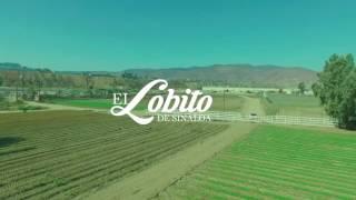 Que la arresten - El Lobito de Sinaloa Video Oficial