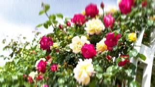 WOODS - rose garden